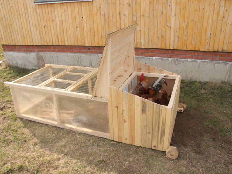 Клетка для курицы с цыплятами своими руками