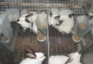 Как ухаживать за кроликами