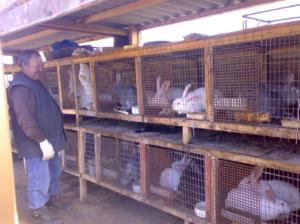 Как спариваются кролики
