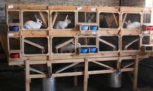 Какие санитарные процедуры проводят кроликам