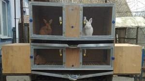 Условия для содержания кроликов