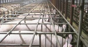 Свинарник собственными руками