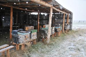 Как построить омшаник для пчел своими руками