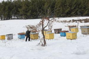 Где зимуют пчелы