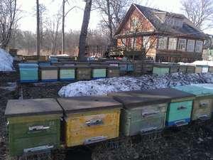 Как перезимовать пчелам
