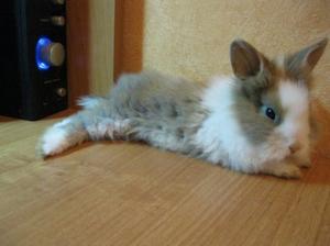 Обустройте кролику комфортное жилище и следите за ним вне клетки