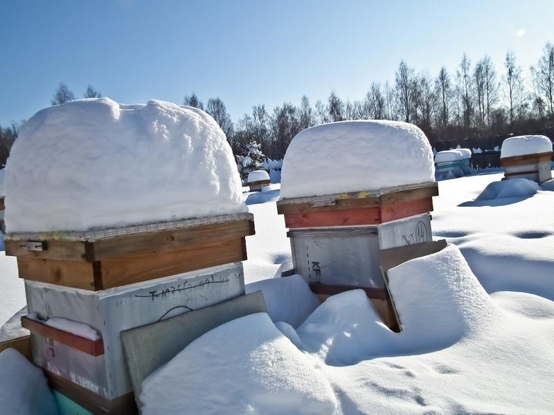 Как утеплить пчелиный домик