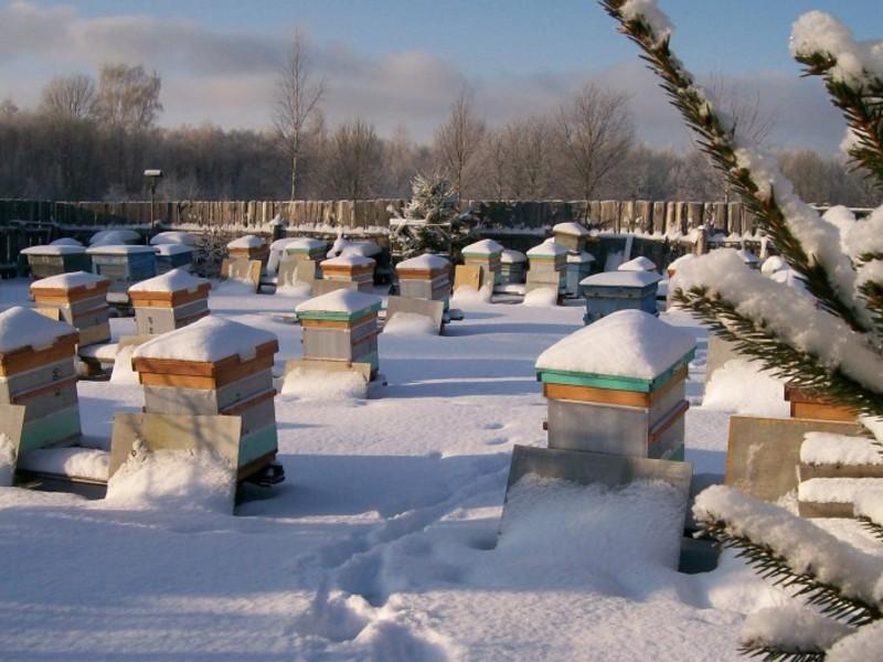 Как создать условия для пчел зимой