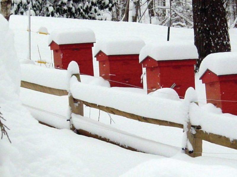 Зимние домики для пчел на пасеке