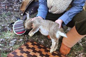Как разделывать кролика, чтобы сохранить шкуру