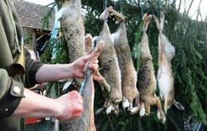 Как безболезненно и без вреда для меха забить кролика