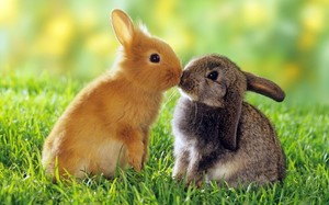 Кроликов разводят для получения вкусного мяса и красивой шкурки