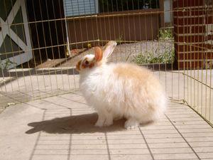 По аппетиту и активности кролика можно судить о его состоянии здоровья