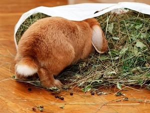 Болезни кроликов: симптомы, их своевременное лечение и профилактика