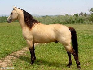лошади фото породистые