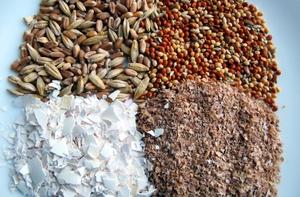 Приготовление корма для перепелов дома - советы