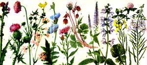 Какие растения считаются лучшими методоносами