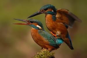 Размножение птиц - особенности