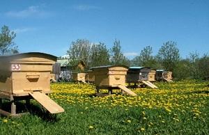 Что нужно начинающему пчеловоду