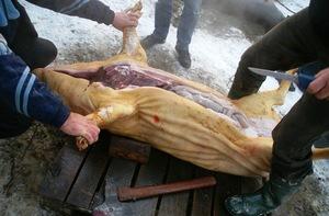 Разделка тушки поросенка и свиньи