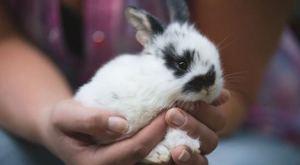 Декоративный кролик дома