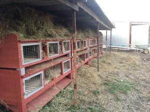 Кроликоферма в сельском доме