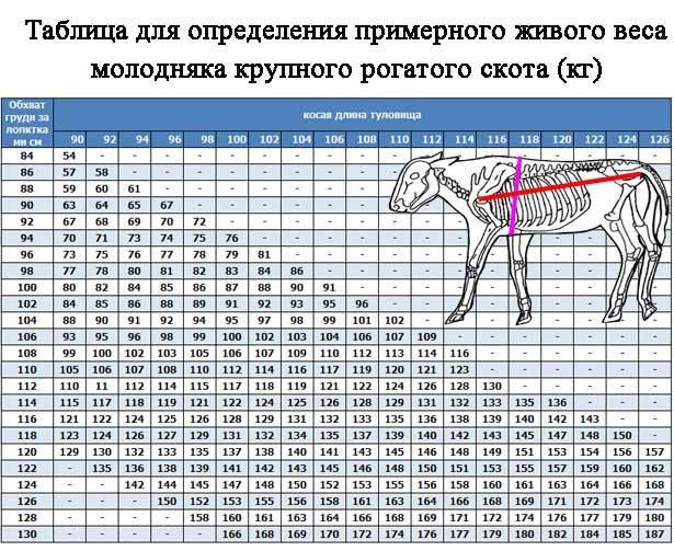 Сколько весит теленок в 20 дней