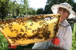 Особенности пчеловодства в Башкирии