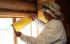 Пчеловоды Башкирии и знаменитый башкирский мед