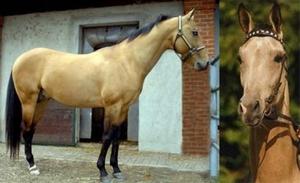 Описание масти лошади