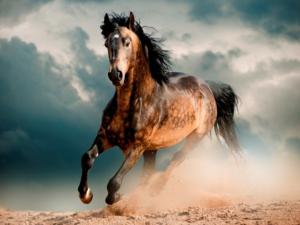 Сколько живут дикие и домашние лошади?