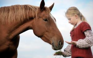 Лошадям необходимы правильное питание, забота и уход