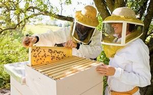 Основные правила пчеловодства