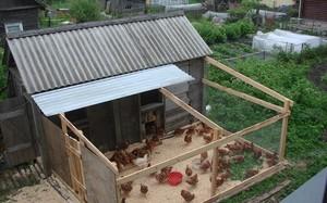 Как возвести домики для кур