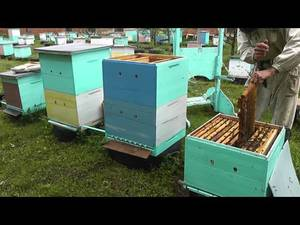 Метод Цебро - эффективное пчеловодство