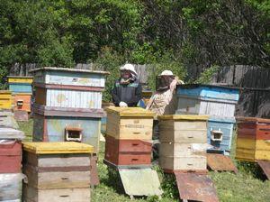 Различные методы пчеловодства