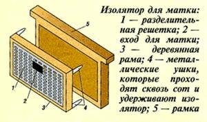 Метод Цебро в пчеловодстве - простая методика
