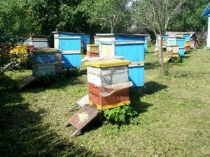 Пчеловод Владимир Цебро известен во всем мире благодаря уникальной методике