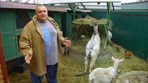 Советы специалистов как увеличить удои молока у коз