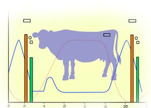 Поведение коровы при беременности
