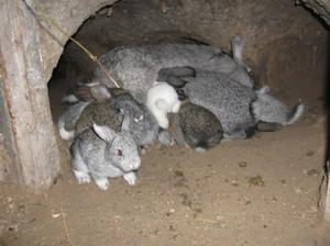 Содержание кроликов - особенности ухода и кормежки в яме
