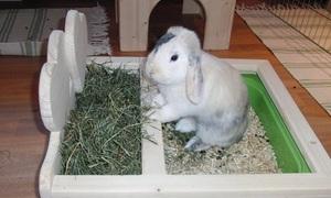 Декоративный кролик в квартире