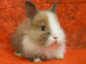 Как выбрать кличку (имя) для домашнего декоративного кролика, как назвать
