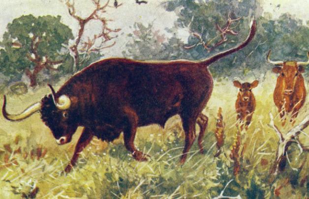 Древний бык тур картинки