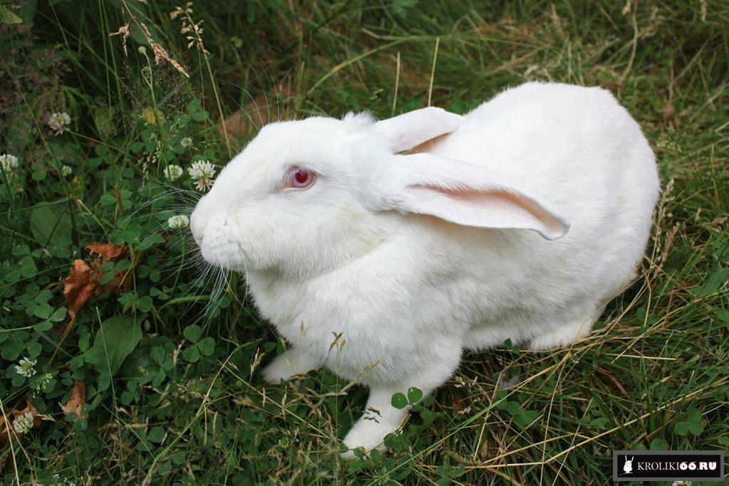 Инструкция в картинках как разводить кроликов