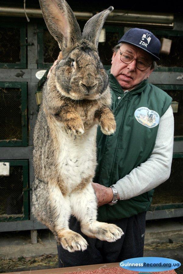 почему большой заяц фото радость боль, всегда