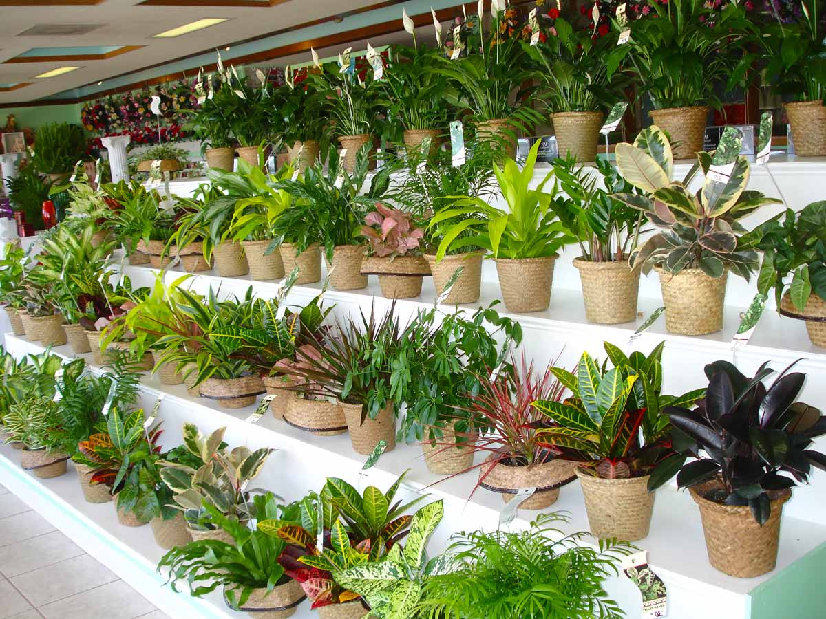 Как правильно поливать растения? Самые важные правила