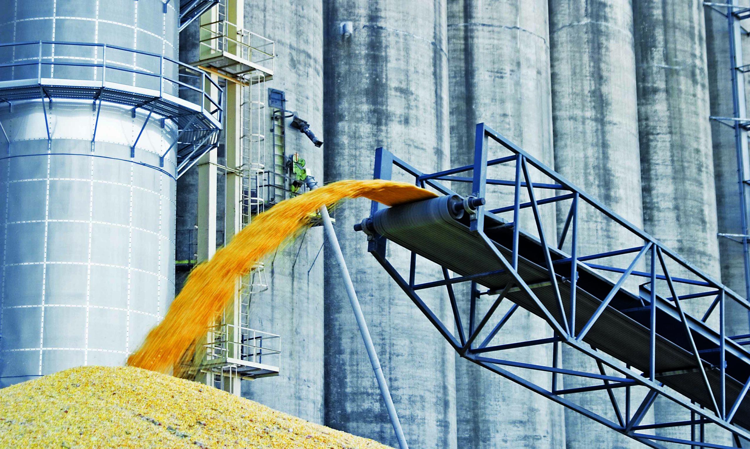 Выращивание и обработка пшеницы