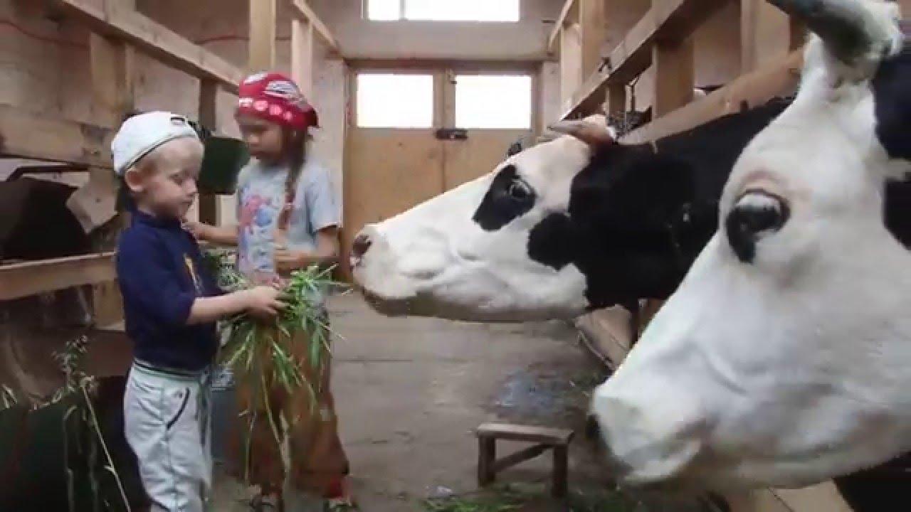 Как кормить коров