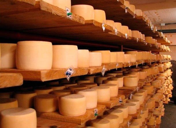 Сыроварня как бизнес